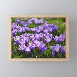 Purple Crocuses Framed Mini Art Print