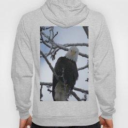 Bald Eagle at 12 Below -- Soldotna, Alaska Hoody