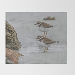 Pair of Plovers on the beach Throw Blanket