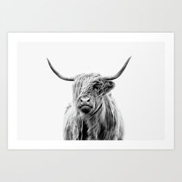 Portrait of a Highland Cattle Art Print