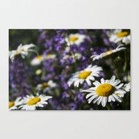 rileigh smirl Canvas Prints featuring Field of Daisies by Rileigh Smirl