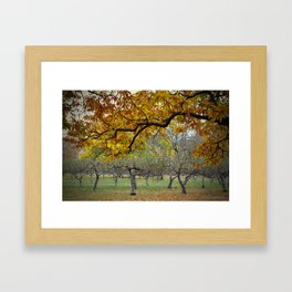 Autumn Orchard Framed Art Print