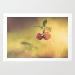 Macro shot of cowberry growing in forest Art Print