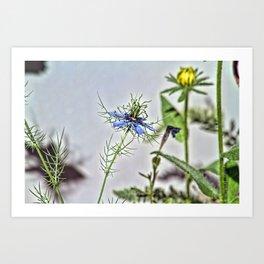 Blue Nigella Art Print