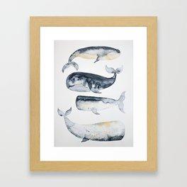 Whale 1 Framed Art Print