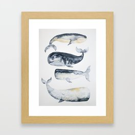 Whale 1 Framed Art Print
