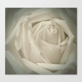 Soft White Rose Canvas Print