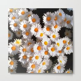 Brilliant White Daisies On Black Floral Art Metal Print