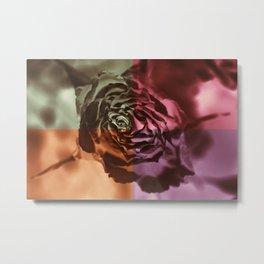 Dry orange rose Metal Print