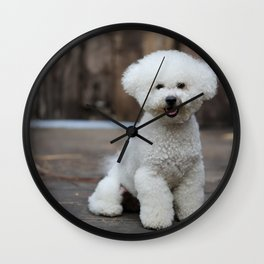 Cute little Bichon Wall Clock