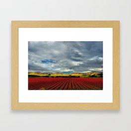 Marigold Field Framed Art Print