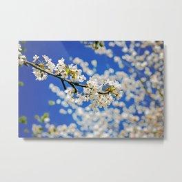 Spring Blossom IV Metal Print