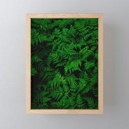 Deep Forest Ferns Framed Mini Art Print