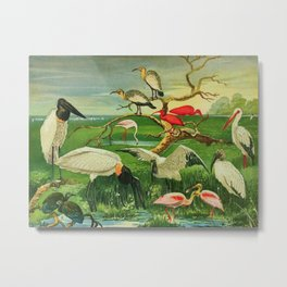 Amazonian birds by Göldi & Emil August Brazil Colorful Tropical Birds Illustration Flamingos Metal Print