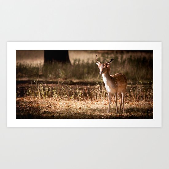 Deer in the Park Art Print