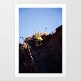 Succulent Cliff Art Print