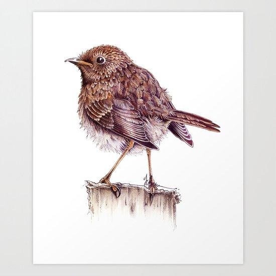 Juvenile Robin Art Print