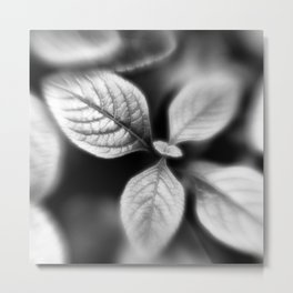 Botanica Obscura #4 Metal Print