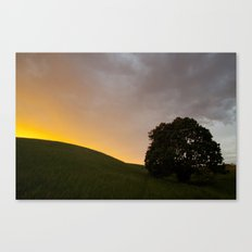 sunset hill and tree Canvas Print
