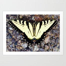 Beautiful Monarch Butterlfy Art Print