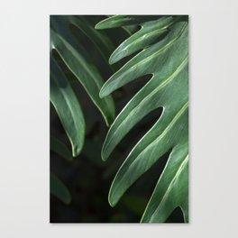 Tropical Leaves on Black Canvas Print