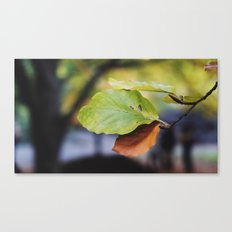 Central Park Fall Series 6 Canvas Print
