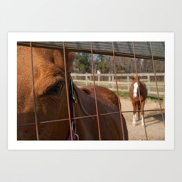 Fenced In Animal / Horse Photograph Art Print