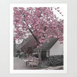 Pink Cherry Blossom Tree in The Netherlands | Travel Photography Art Print