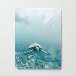 Sea Turtle Adventures Metal Print