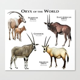 Oryx of the World Canvas Print