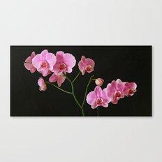 Pink Phalaenopsis Canvas Print