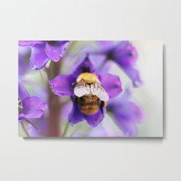 Bumble-bee and larkspur Metal Print