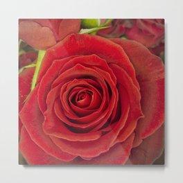 Red Rose for Love Metal Print