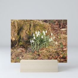 Snowdrops in the forest Mini Art Print