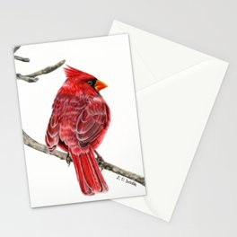 Winter Cardinal On White Stationery Cards