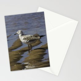Juvenile Silver Gull Stationery Cards