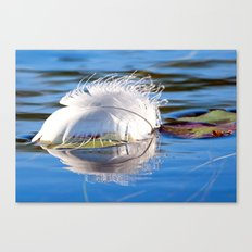 Swan Feather on Lake Canvas Print