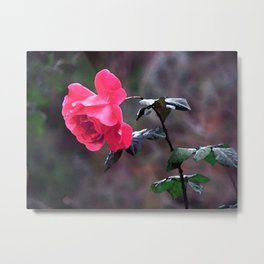 Nodding Rose in Moolight Metal Print