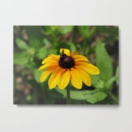 Black Eyed Susan and Bee Metal Print