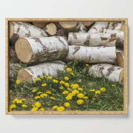 Dead Birch Tree And Living Dandelion Serving Tray