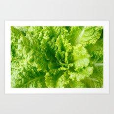Lettuce closeup Art Print