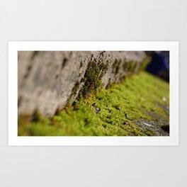 mini moss Art Print