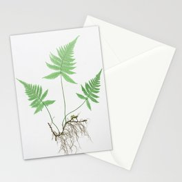 Ferns of Great Britain and Ireland - Vintage Botanical Illustration Print Stationery Cards