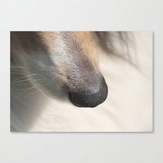 dog nose  Canvas Print
