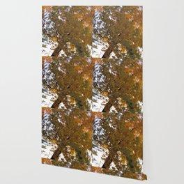 Autumn Daze I Wallpaper
