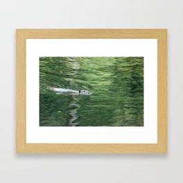 Beaver on an Evening Swim Framed Art Print
