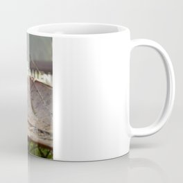 Dew drops on a fallen leaf Coffee Mug