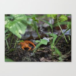 Bright Newt Canvas Print