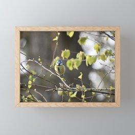 Bluetit  Framed Mini Art Print