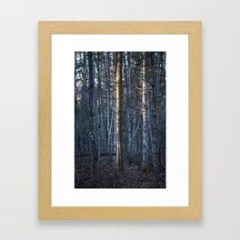 the light tree Framed Art Print